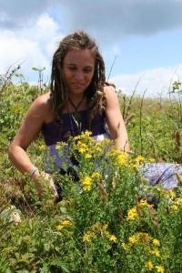 Flower Essence Consultation Asheville